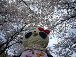 空いっぱいの桜