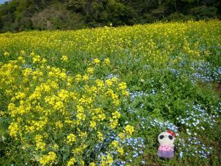 おばぶを菜の花畑でつかまえて