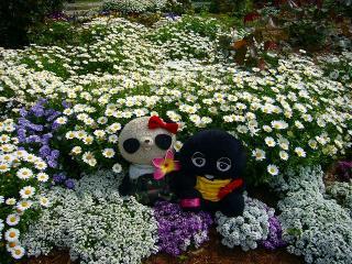 こっそりお花と撮影
