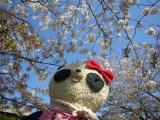 ばぶちゃん春の自衛隊ポスター風ショット