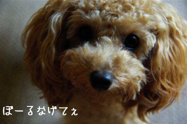 ゴハン風景 012 (Small)