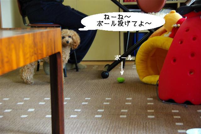 ゴハン風景 017 (Small)
