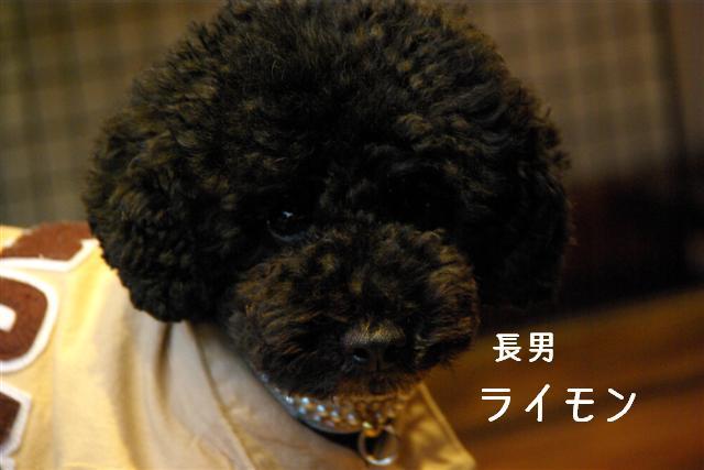2007.12.29ティーダ 089 (Small)