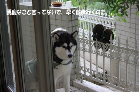 20110530_2.jpg