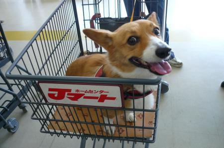 Jマートでお買い物。