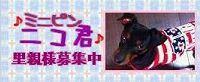 niko_20120411141852.jpg