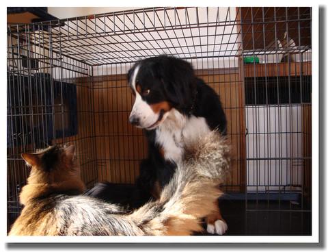 三毛犬との生活