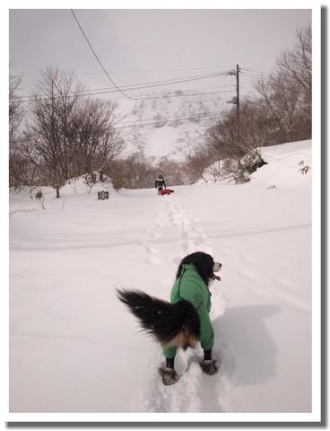 雪を求めて・・・
