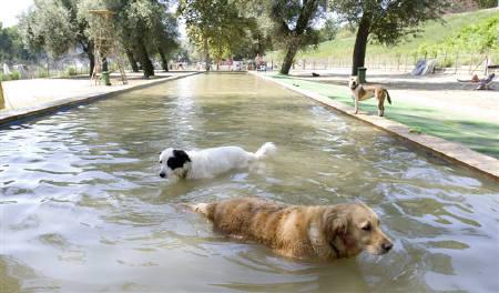 ローマ初の犬専用プール、40度近い酷暑で人気