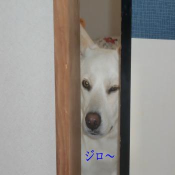 CIMG1863_convert_20090911193551.jpg