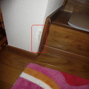 CIMG2146_convert_20091012131913.jpg