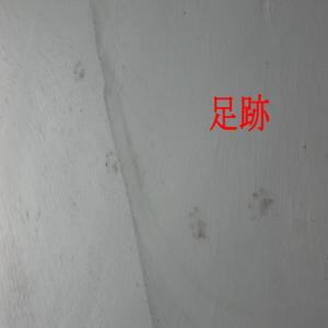 CIMG2274_convert_20091022183218.jpg