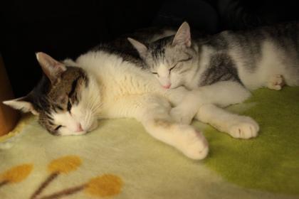 猫の寝姿っていいね