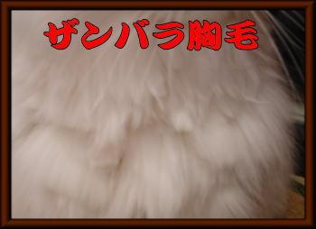 ザンバラ胸毛