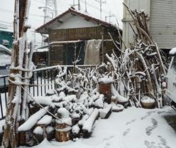 20120229雪の流木