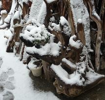 20120229雪の流木2