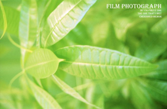 Film photograph11
