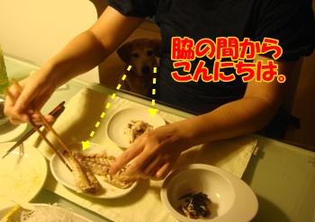 11_09_09_02.jpg
