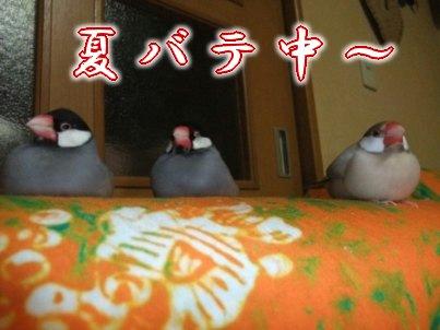 文鳥ではなく・・・