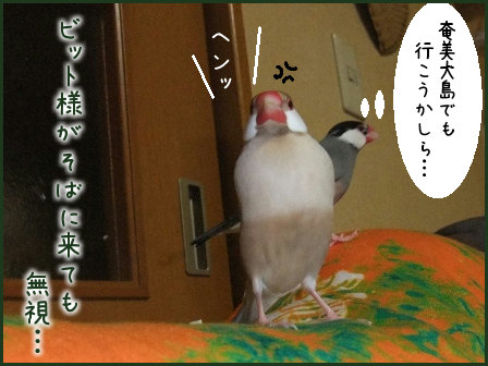 文鳥 019