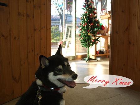 サンタの国の犬(2007/12/24)