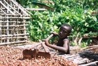 SCL-cocoa.jpg