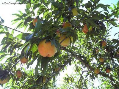 あんざい果樹園
