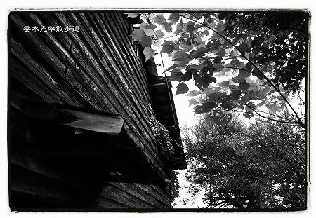 倉庫の木漏れ日