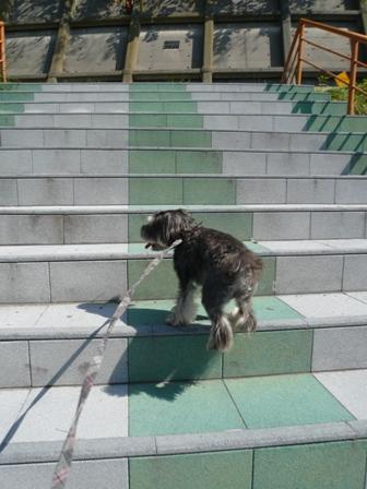 階段大好き~♪