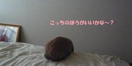 P10805781.jpg