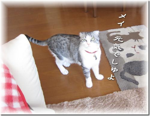 2011-19-1.jpg