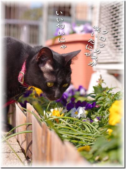 お花好きだニャ