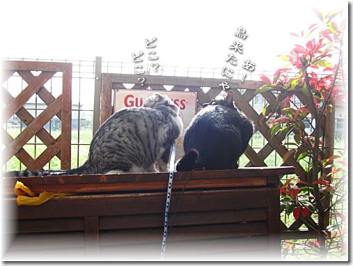 仲良く鳥観察にゃ
