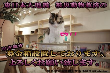 被災動物への募金