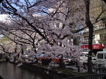 桜-木屋町通り-