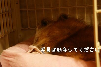 DSC03336.jpg