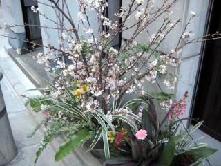 20120207_tsuta_sakura.jpg