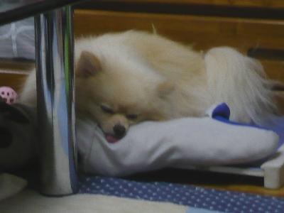 ルイたんの枕、臭そうなんだけど。。。。