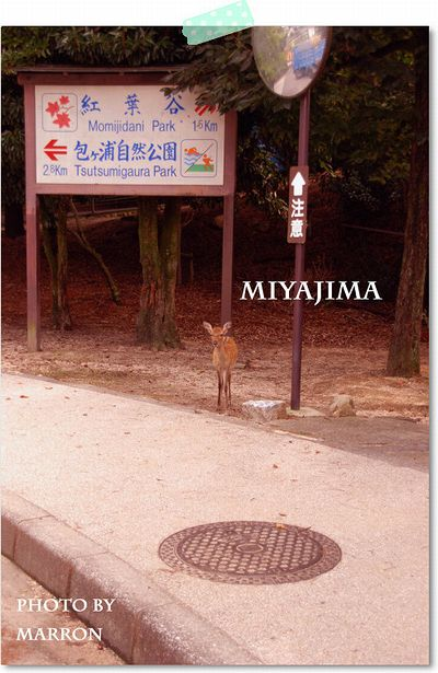 mjm2009a03.jpg