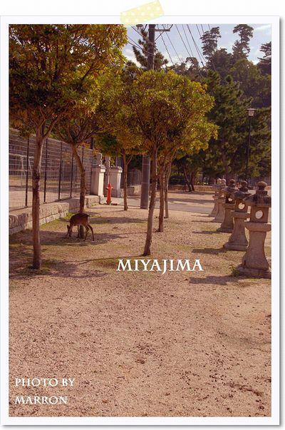 mjm2009a07.jpg