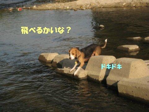 IMG_4367_sh01.jpg