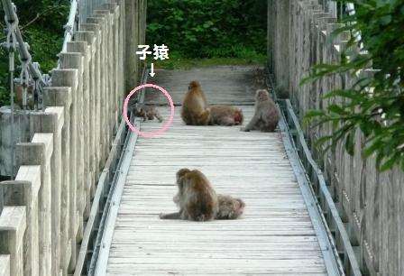 道端に猿の軍団…