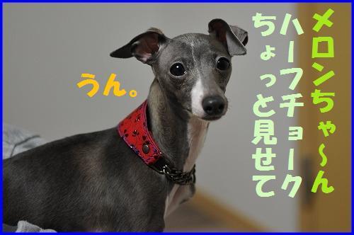 DSC_3214_20110409014712.jpg