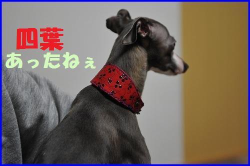 DSC_3218_20110409014713.jpg