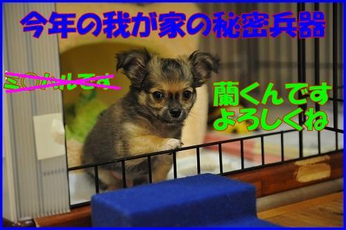 DSC_3316_20110502145852.jpg