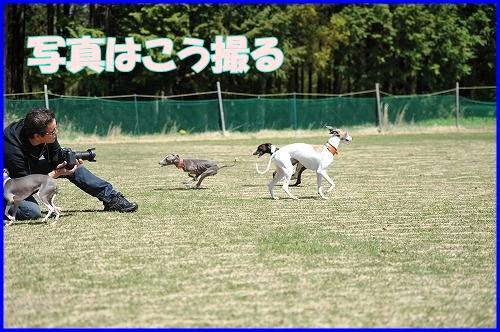 DSC_3421_20110428235412.jpg