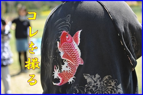 DSC_3474_20110429005543.jpg