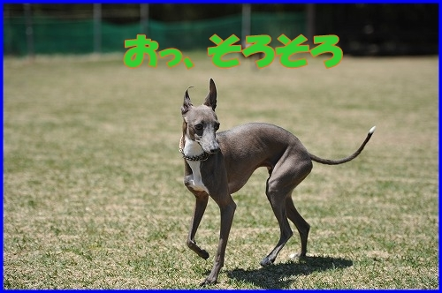 DSC_3614_20110429000147.jpg