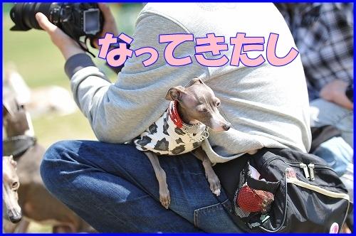 DSC_3659_20110429000421.jpg