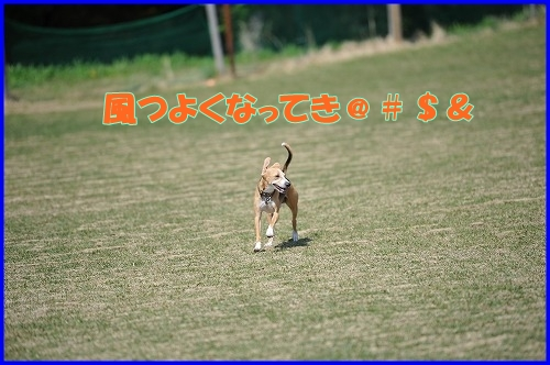 DSC_3662_20110429000420.jpg